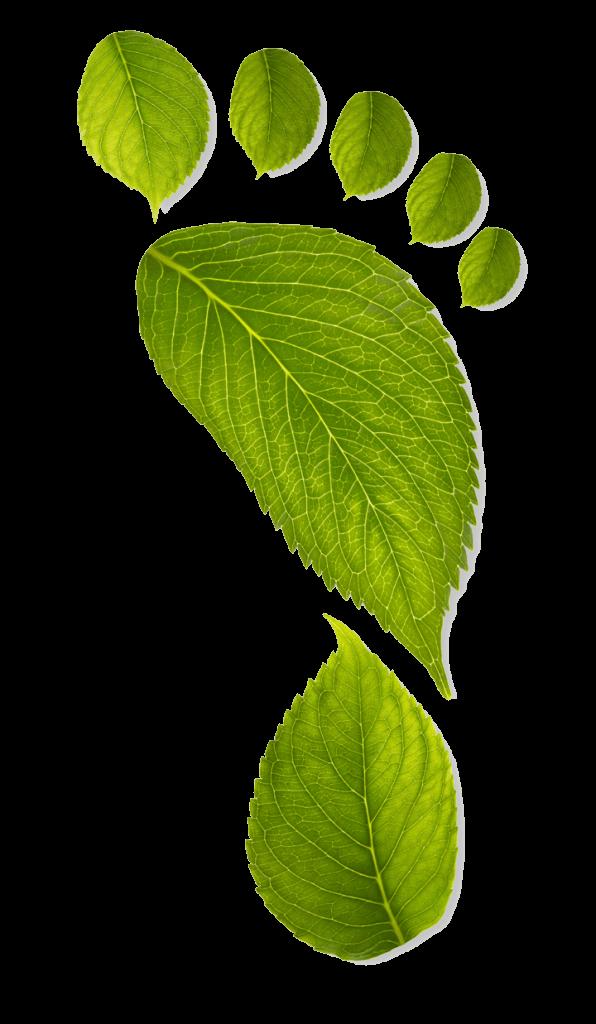 Fact File - Carbon Foot Print